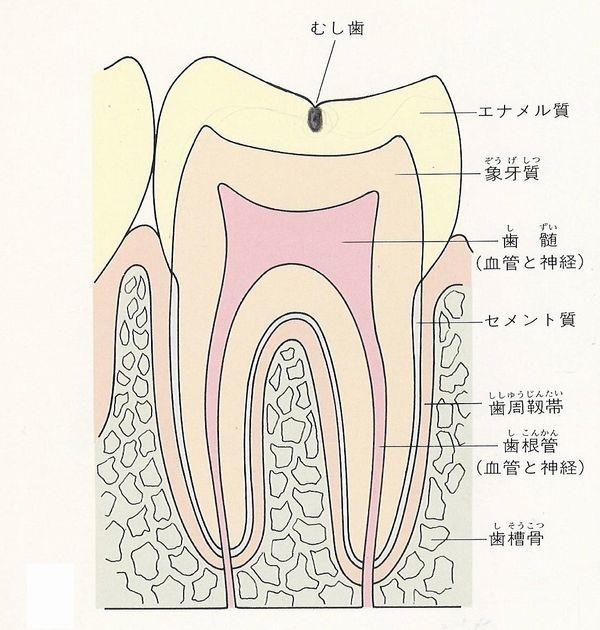 横浜の歯科・歯医者 横浜山手デンタルクリニック 虫歯の治療