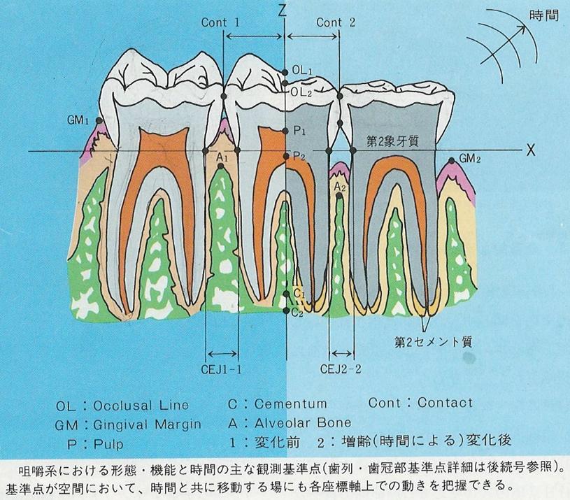 横浜市中区の歯科・歯医者 横浜山手デンタルクリニック 摩耗や咬耗 やマイクロクラックは何故発生する